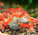 SunGrow Mineral Rocks --- Provide Magnesium that enhances Shrimp's Color - Health Booster - Calcium helps molting - Absorb Toxic Chemicals of Water - For Shrimps, Crayfish & Snails - Aquarium Decor