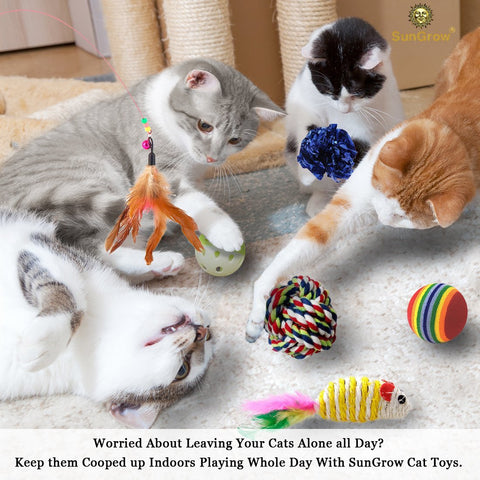 Cat Kit Regular - Set of 5 Dog Products