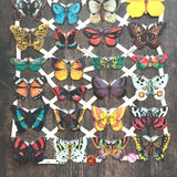 German Scraps - Butterflies - Die Cuts, Cut Outs, Reproduction, Vintage Style, Vintage Inspired, Paper Ephemera, Vintage Butterflies, Insect