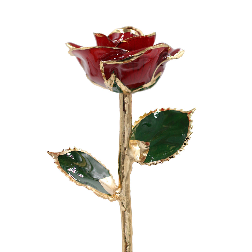 Gold Trimmed Red Rose