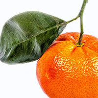 Essential Oil of Tangerine - Creole Secret Therapeutic Aromatherapy