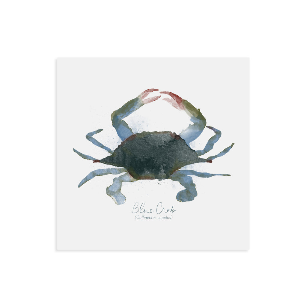 Maryland Blue Crab