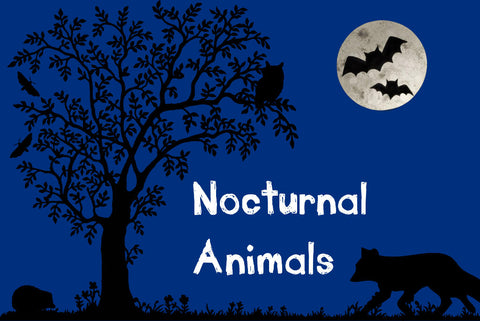 Nocturnal Animals Discovery Box