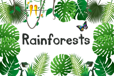 Rainforests Discovery Box