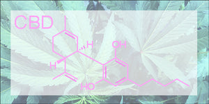 Cannabinoids and Your Skin