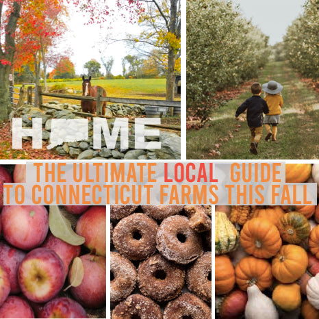 Best Apple & Pumpkin Picking In Connecticut: The Ultimate Guide To CT's BEST Fall Farms