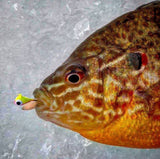 ORANGE/YELLOW GLOW TUNGSTEN JIG - Kenders Outdoors