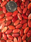 6x12mm Red Spiny Oyster Shell - Long Oval Cabochon - Native Marvels