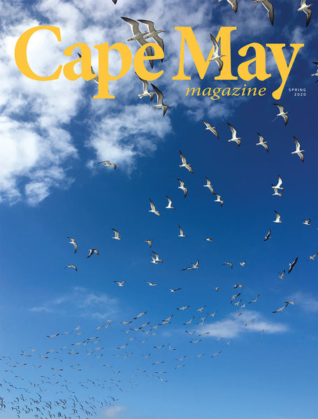 Spring 2020 cover featuring photograph of gulls in flight by Carol Hannon