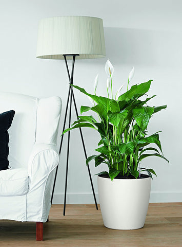 Self-Watering White Matte Ceramic Planter