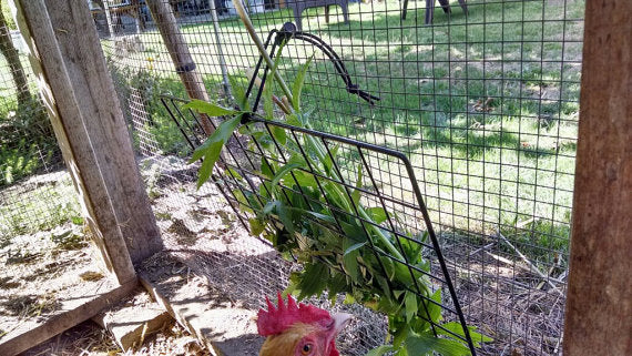 "Peck-It-Clean Veggie Feeder for Chickens, 10"" x 16"""