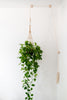 Wood + Rope Modern Hanging Plant Pulley