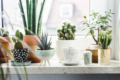 plants for your home office