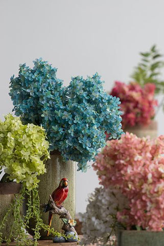 Image of French Hydrangea