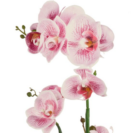 Image of Rnd Potted Orchid