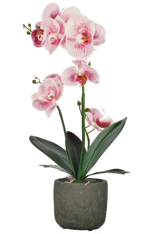 Rnd Potted Orchid