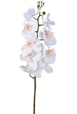 Cream Real Touch Orchid Stem
