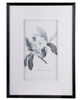 Botanical Black And White Fake Pencil Art