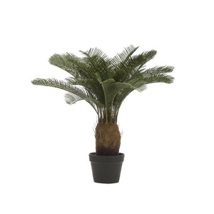 Faux Potted Sago Cycas