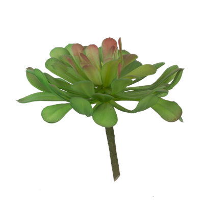 Image of Faux Dudleya Succulent