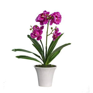 Potted Orchid -F4539