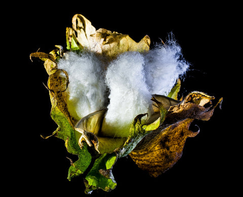The Benefits Of Organic Cotton