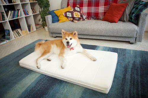 Airweave Partners With First-Ever Canine Ambassador To Show Off Their Comfortable, 100% Washable Mattresses