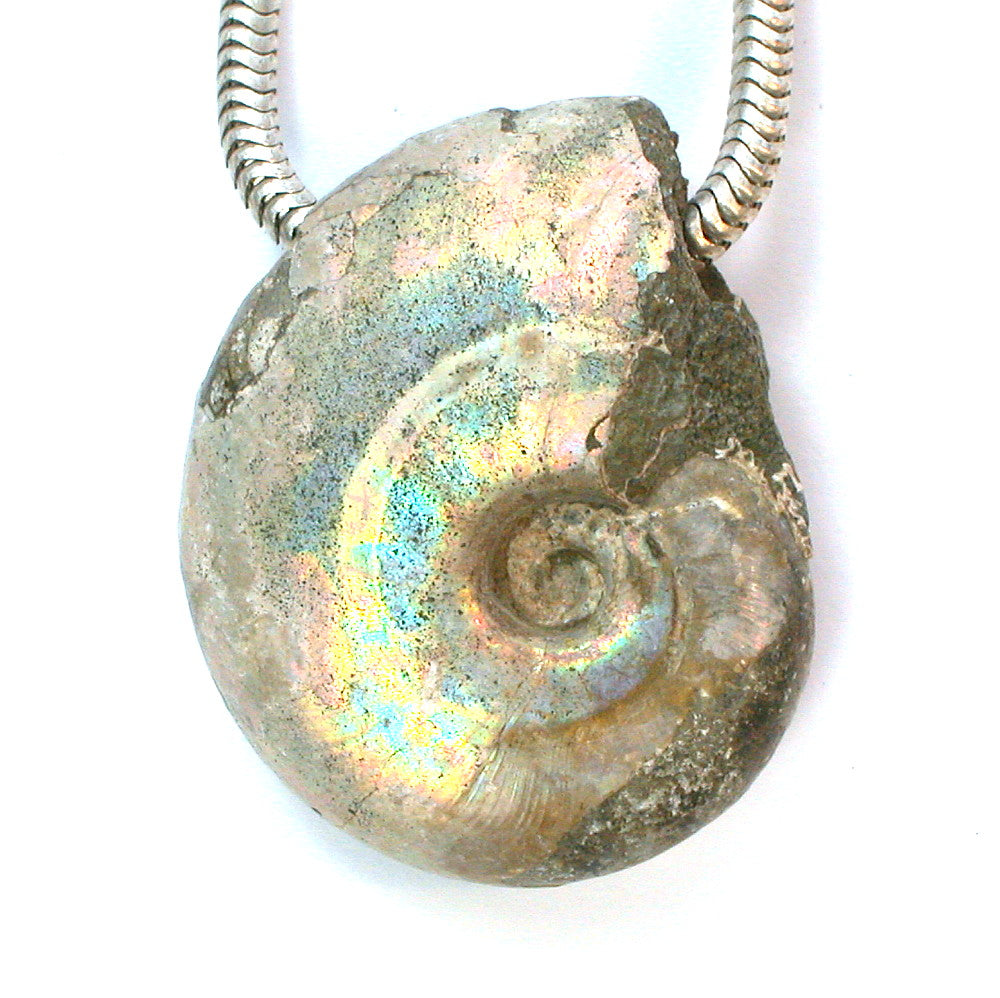 DVH Fossil Iridescent Ammonite Ammolite Natural Focal Bead 31x25x10 (9580) - DVHdesigns
