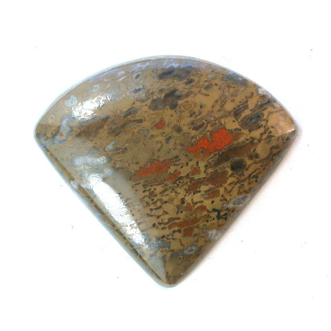 DVH Fossil Dinosaur Bone Fan Cabochon 30x34x6mm (9675) - DVHdesigns