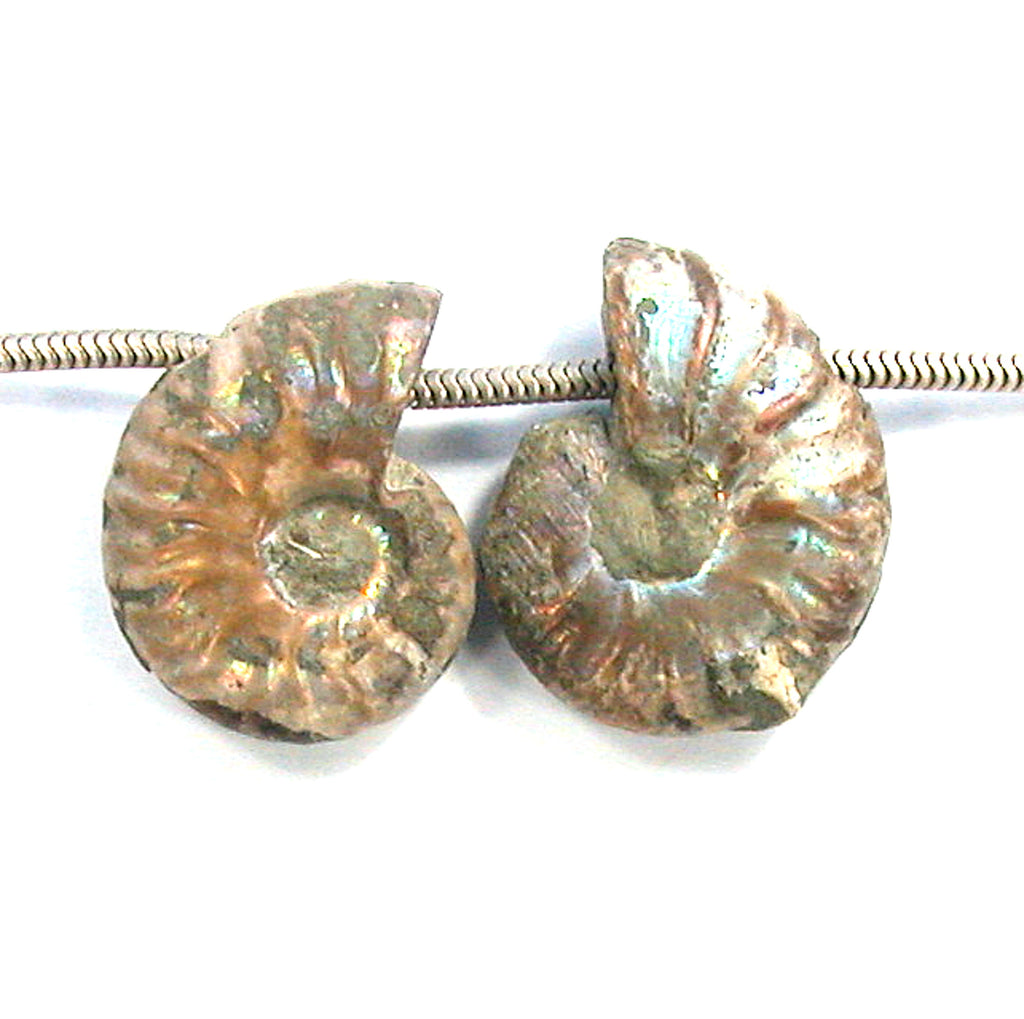 DVH Fossil Iridescent Ammonite Matched Pair Focal Beads 28x22x8 (2826)