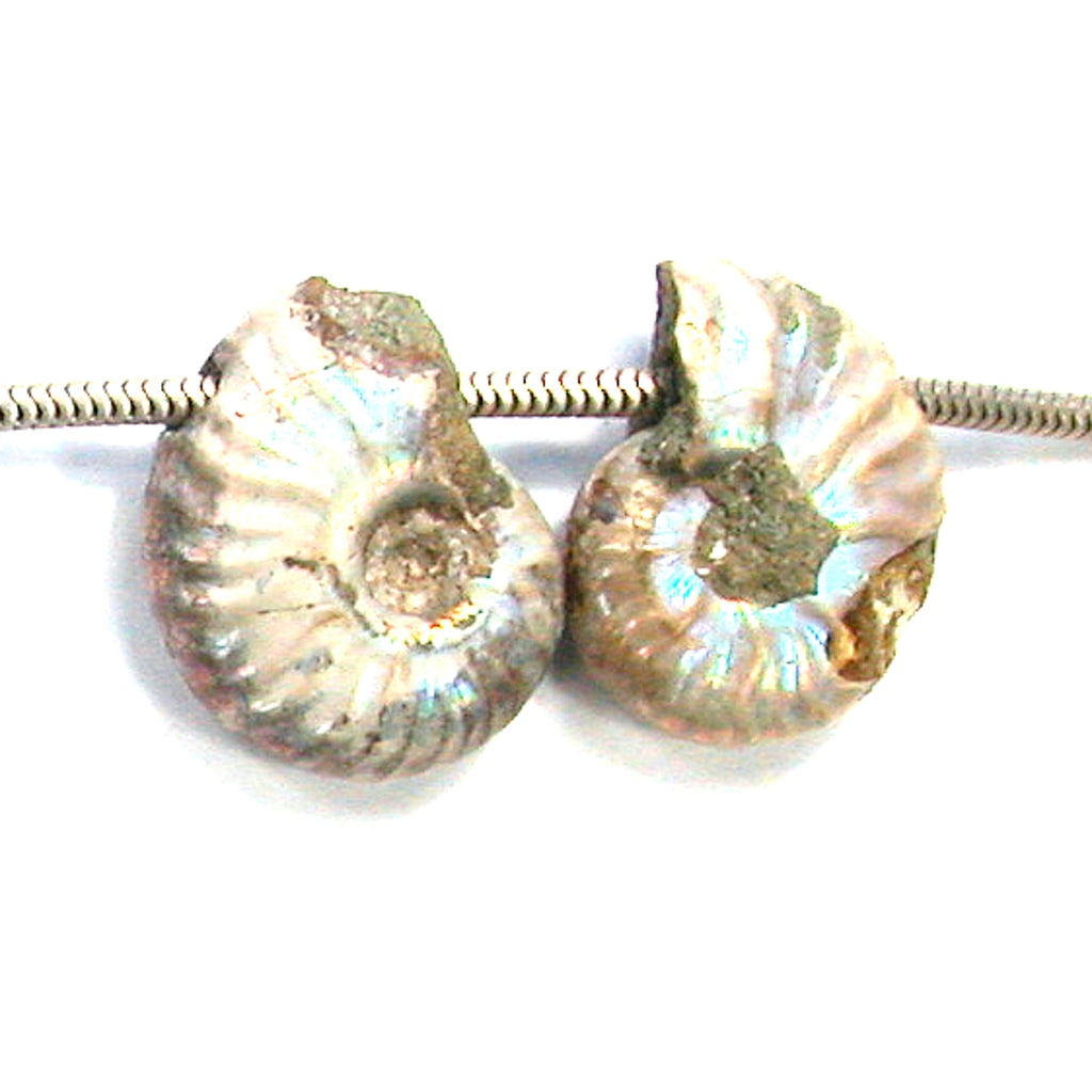 DVH Fossil Iridescent Ammonite Matched Pair Focal Beads 24x19x9 (2827)