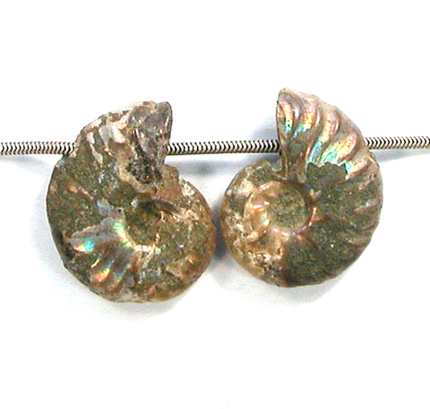DVH Fossil Iridescent Ammonite Matched Pair Focal Beads 26x21x9 (2829)