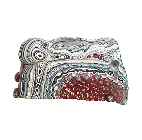 DVH Dragon Scale Fordite Specimen Polished Face Dragons Head (3534)