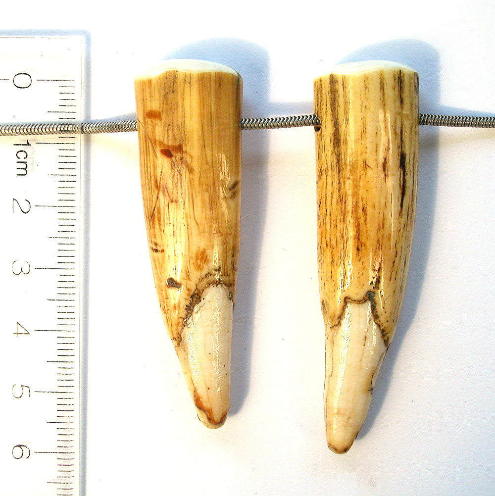 DVH Genuine Fossil Walrus Tusk Tip Pair of Focal Beads 58x17x12 (8223)