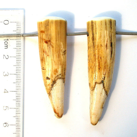 DVH Genuine Fossil Walrus Tusk Tip Pair of Focal Beads 58x17x12 (8223) - DVHdesigns