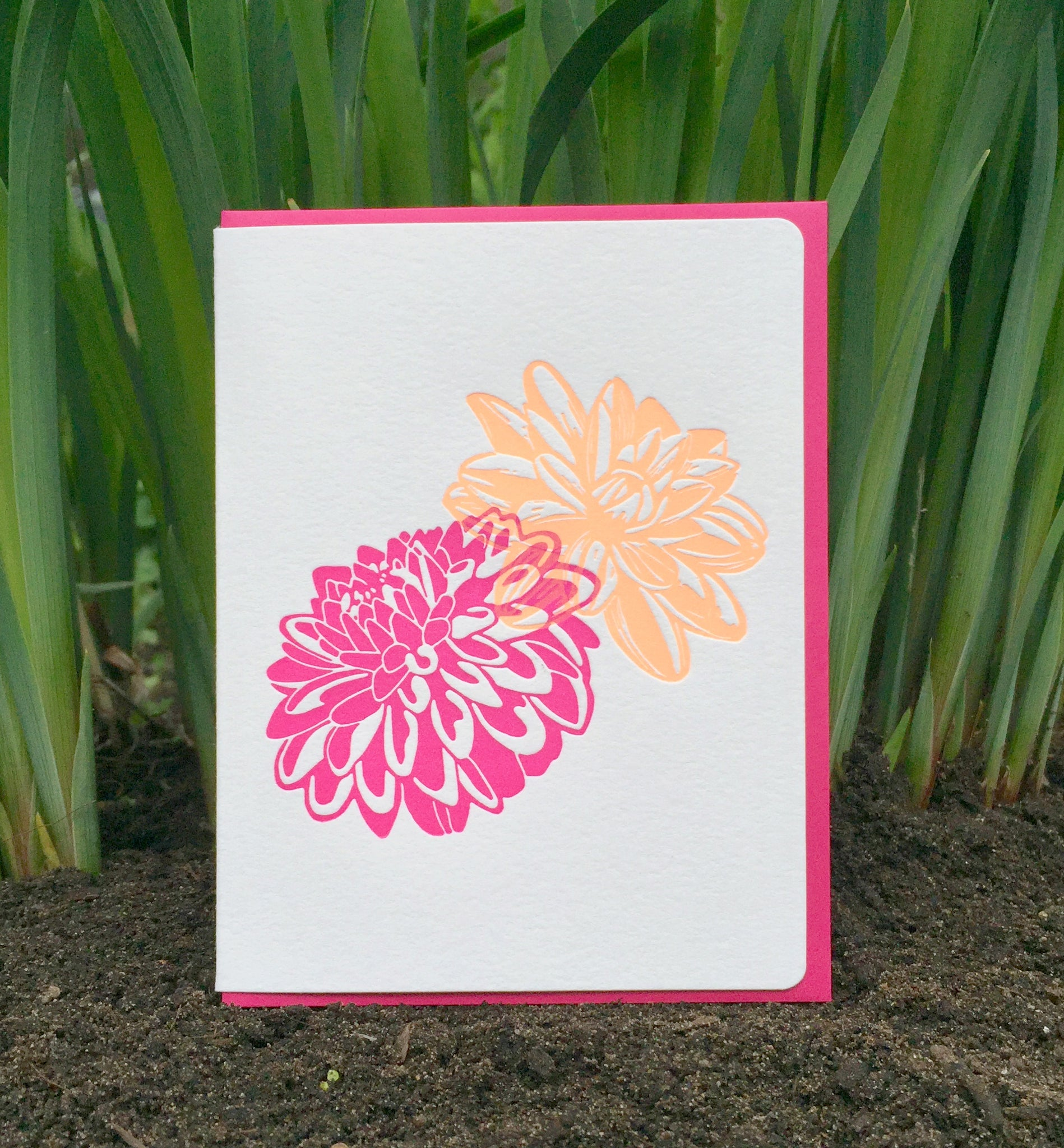 Dahlias pink & orange