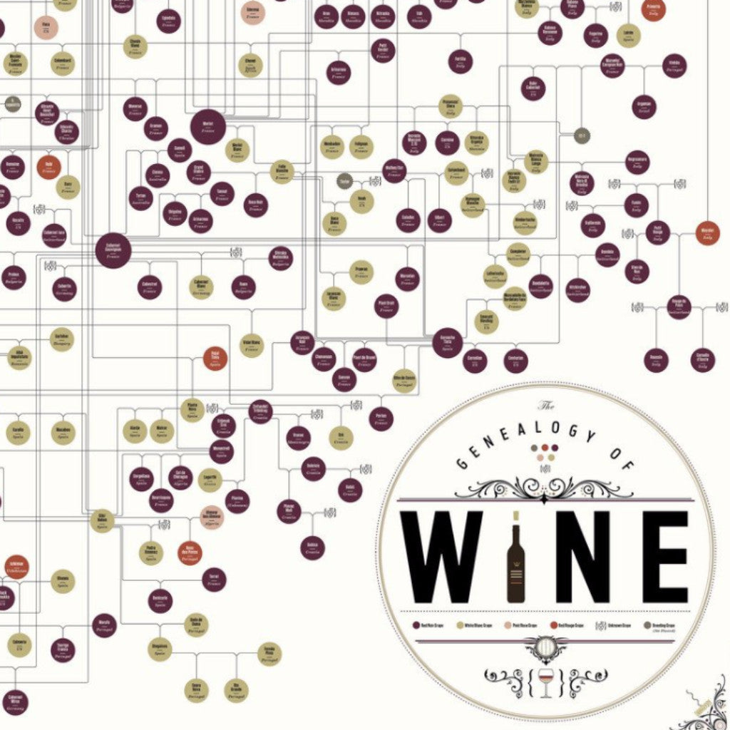 The Genealogy of Wine - Northlight Homestore