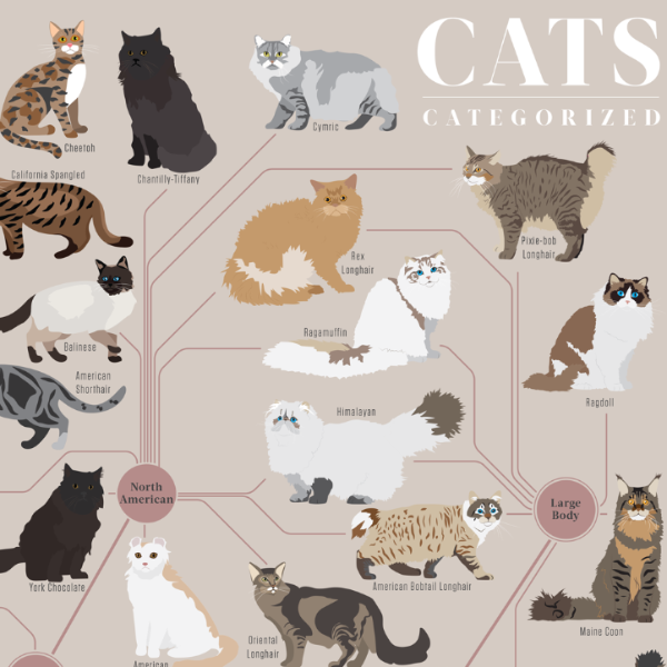 Cats, Categorised