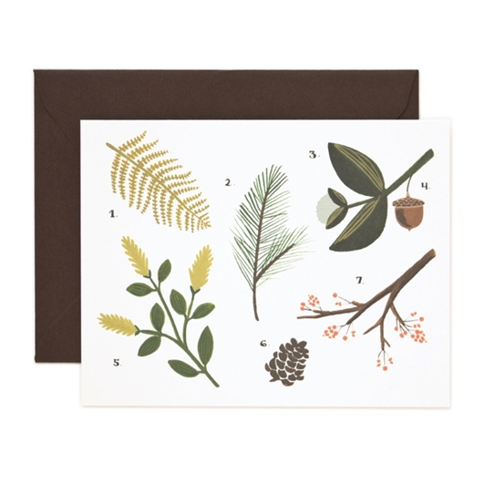 Botanical Chart Card - Northlight Homestore
