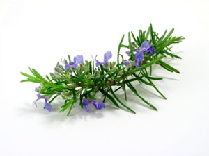 ROSEMARY LEAF EXTRACT ROSEMARY