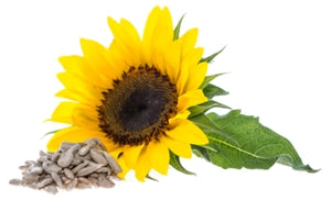 THIAMINE SUNFLOWER SEEDS