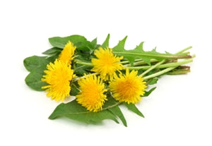 Dandelion Root Extract