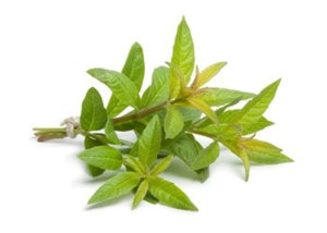 Lemon Verbena Extract