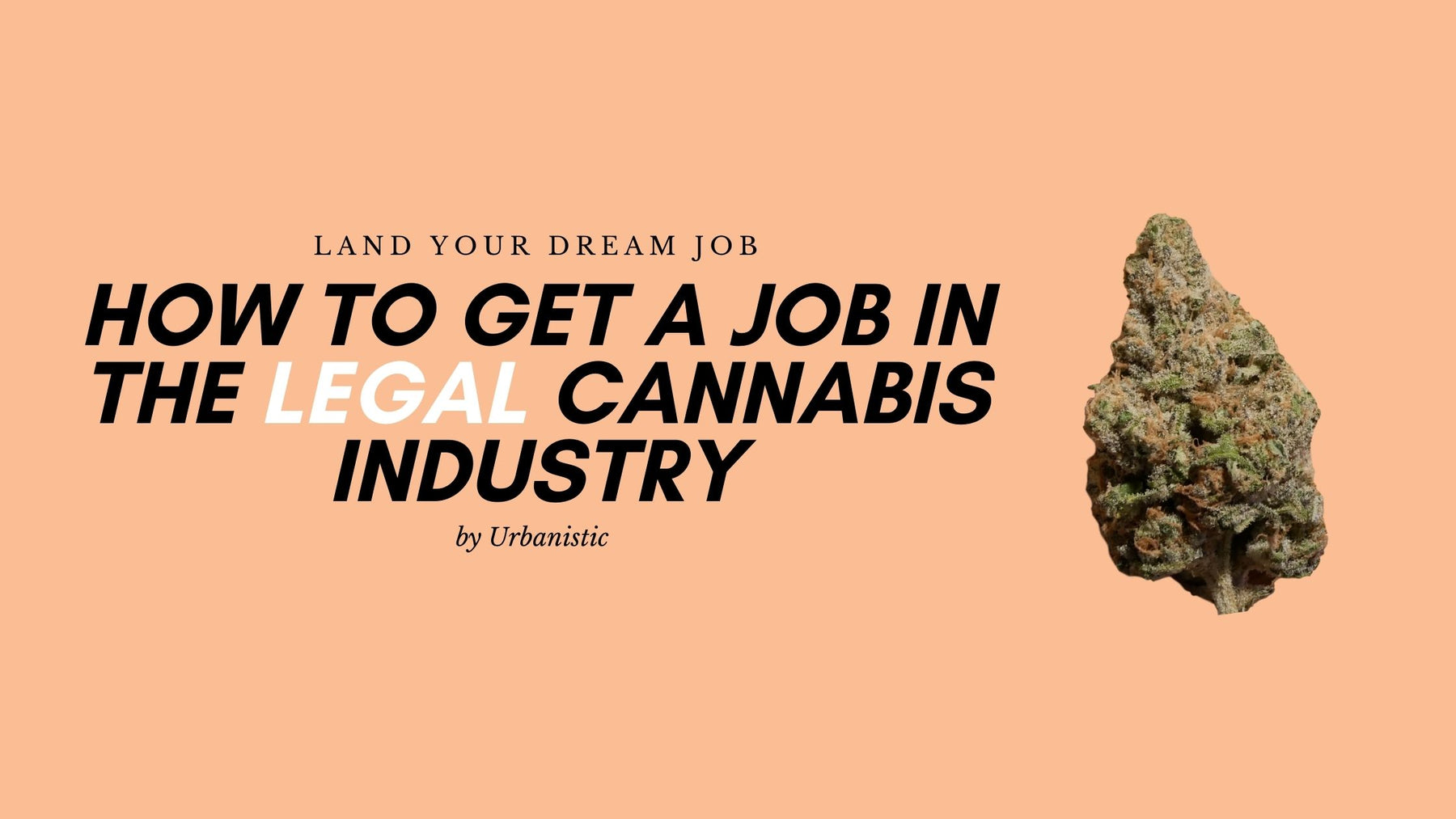 How to get a job in the (legal) cannabis industry
