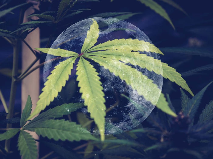 Chinese scientists announced plans to cultivate cannabis in space and on the lunar surface.