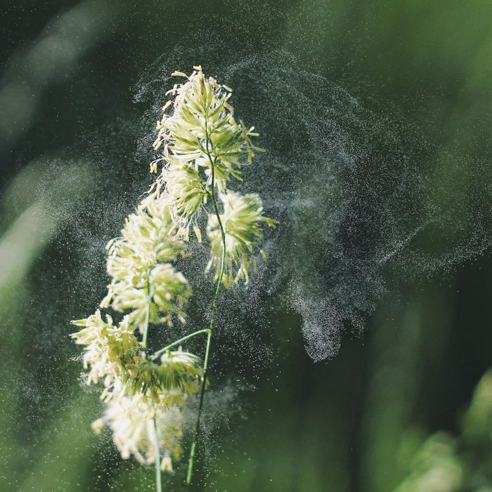 Can CBD help with Hay Fever and Seasonal Allergies?