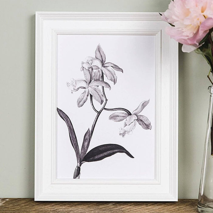 'Cattleya' Vintage Botanical Illustration Print