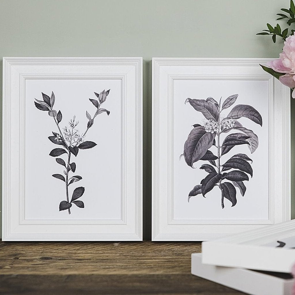 Vintage Botanical Illustration Prints For Gallery Walls 'Rhaphiolepis' and 'Metrosideros'