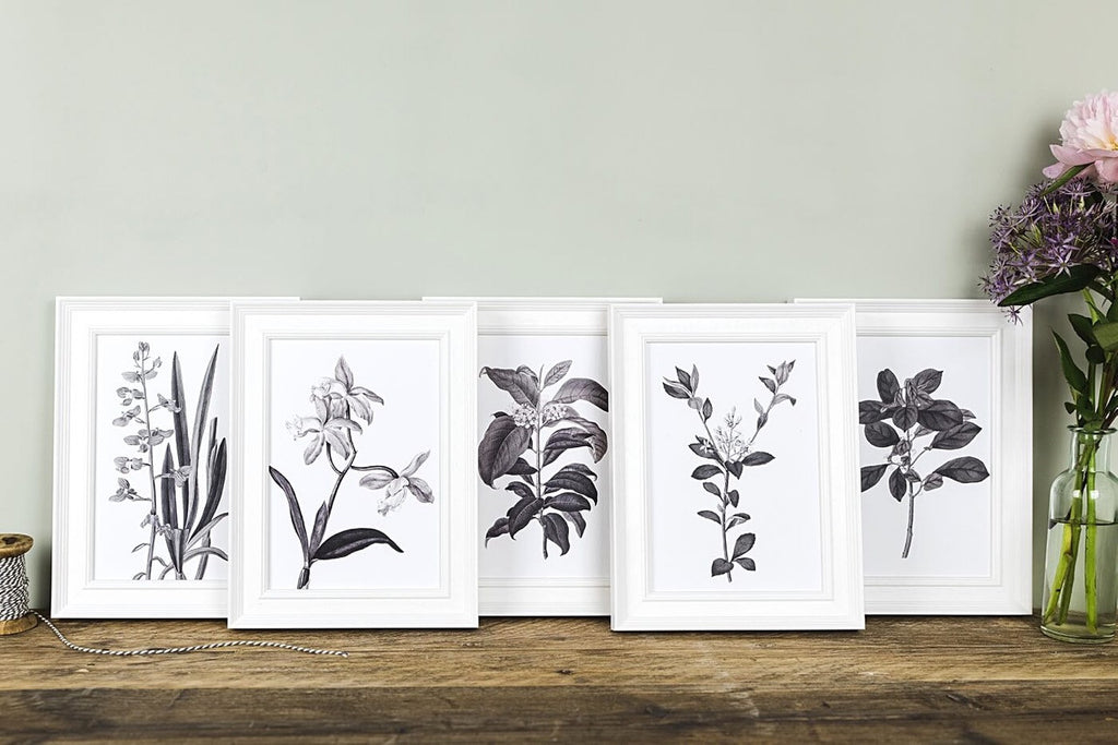 Vintage Botanical Illustrations For Gallery Walls