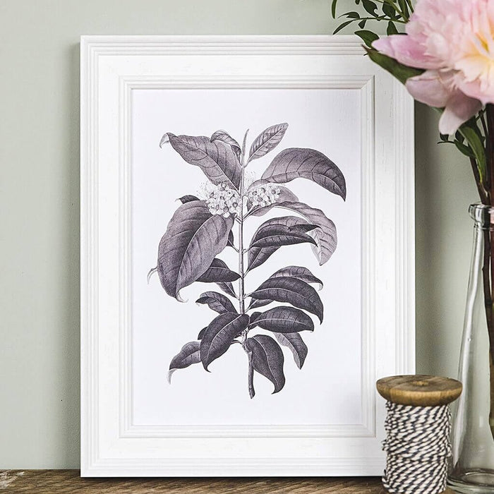 Vintage Botanical Illustration Prints A5